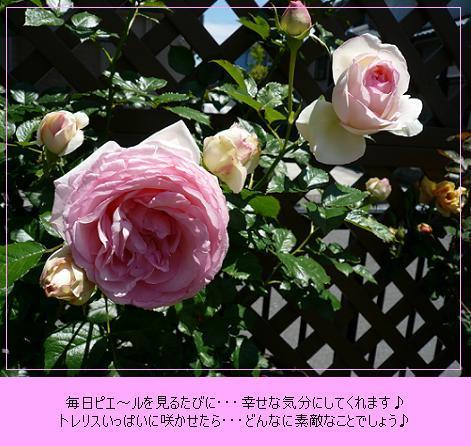 P1070542_3.jpg