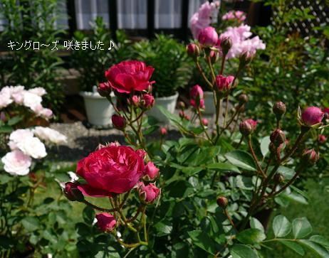 P1070592_k.jpg