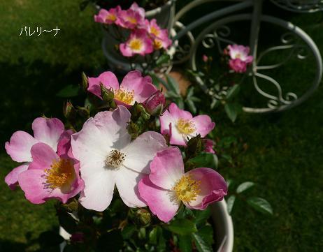 P1070596_ba.jpg