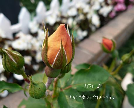 P1070797_cafe.jpg