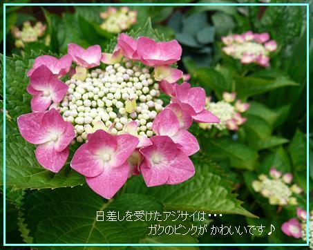 P1080296_6.jpg