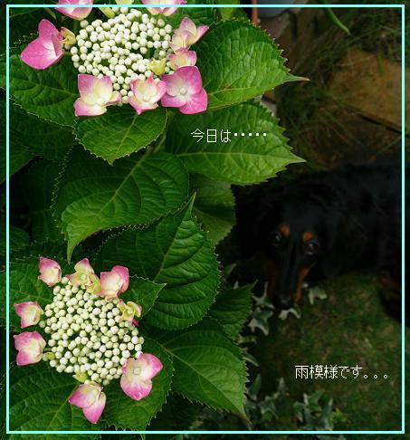 P1080298_a.jpg