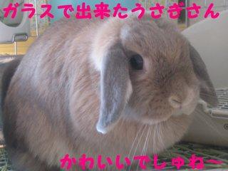 IMG_4373_sh01.jpg
