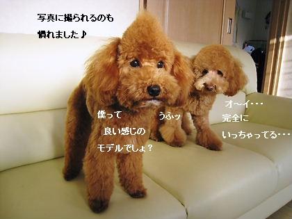 チョコ&ノア3