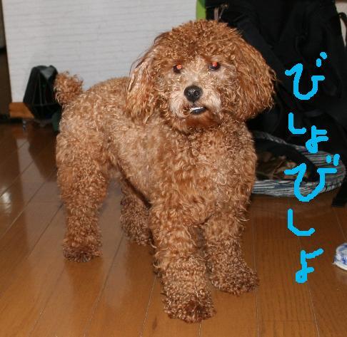 20080531-8.jpg