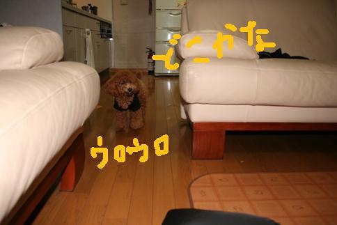 20080605-10.jpg