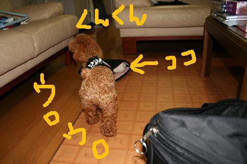 20080605-13.jpg