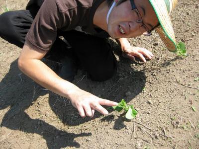 枝豆の芽と私