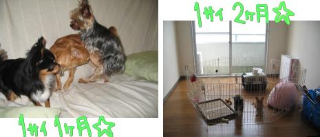 1歳1~2ヶ月