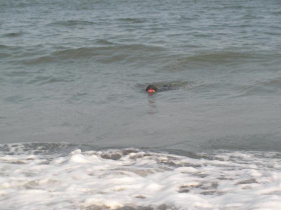 7月11日朝水泳