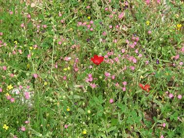 川沿いの春の草花。