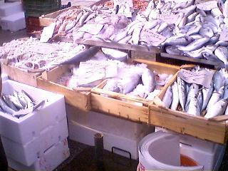 朝市の魚屋さん