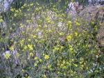 名前のわからない黄色い野花