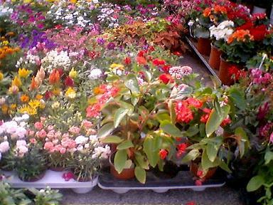 朝市の花屋さん
