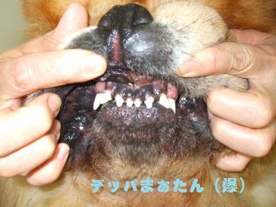 マッチョ前歯。