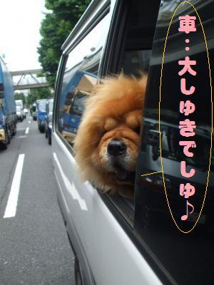 車大好き!!!