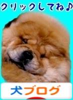 にほんブログ村 犬ブログ 珍しい犬へ