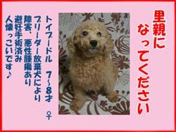 gyaru_poster.jpg