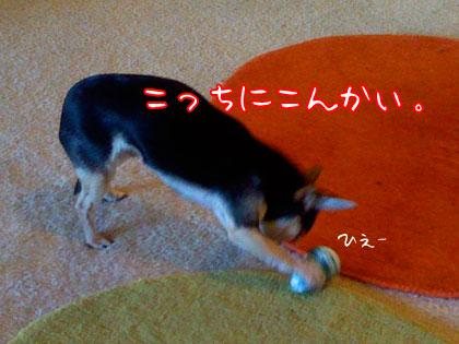 kowai1.jpg