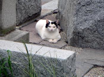 おかっぱ猫