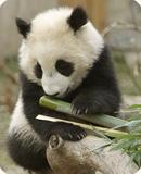 Tai Bamboo