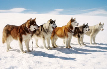 8below_dogs3