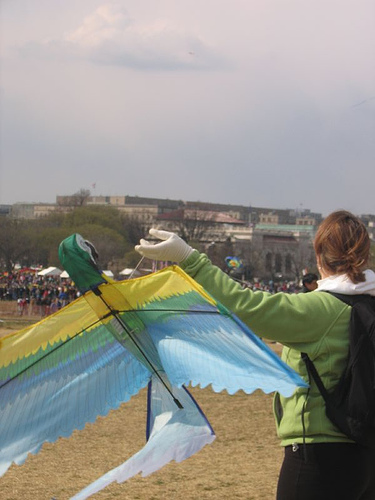 kite_bird