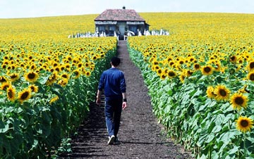 Everything_sunflower