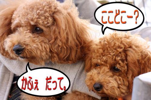 10_20080509231836.jpg