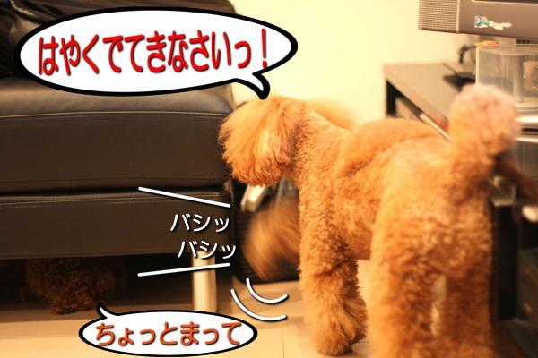 10_20080603191020.jpg
