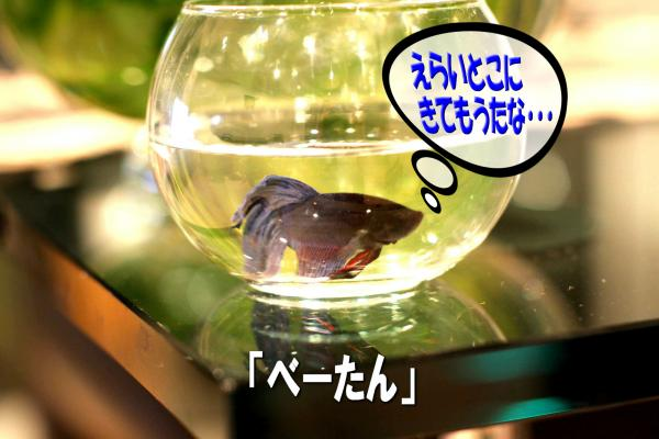 10_20080704174553.jpg