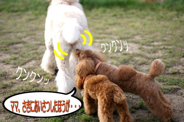 11_20080527141652.jpg