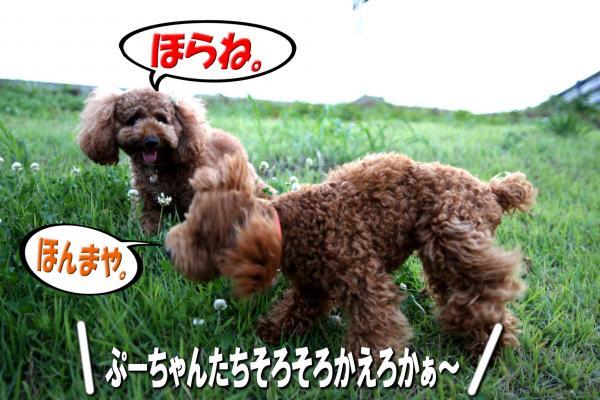 11_20080714171007.jpg