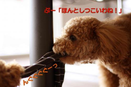 12_20080504023851.jpg