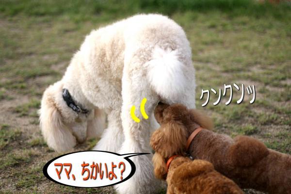 12_20080527141704.jpg