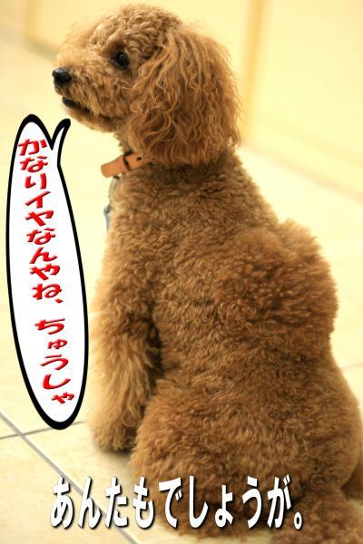 12_20080616155138.jpg