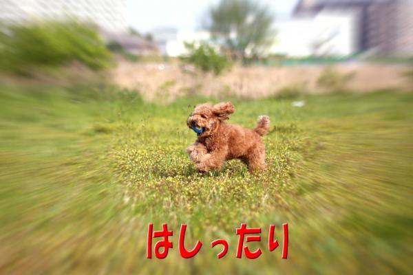 12_20080618174625.jpg