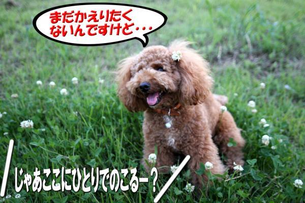 12_20080714171042.jpg