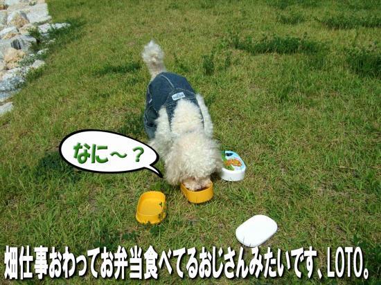 13_20080731150450.jpg