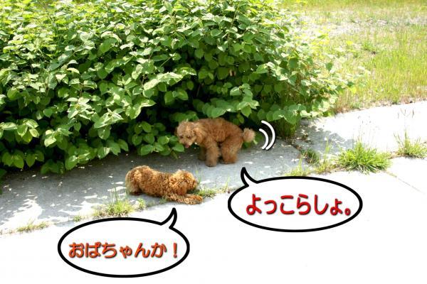 14_20080520192635.jpg