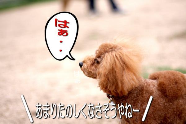 14_20080528182423.jpg