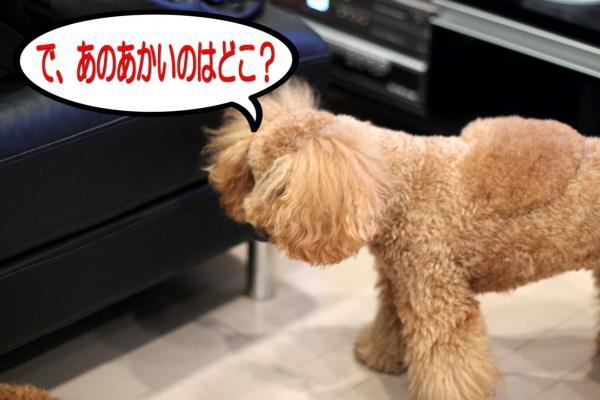 14_20080604181359.jpg
