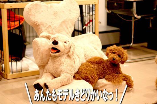 14_20080806145203.jpg