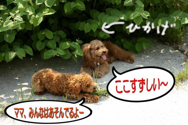 15_20080520192705.jpg