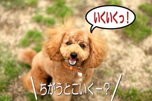 15_20080527141744.jpg