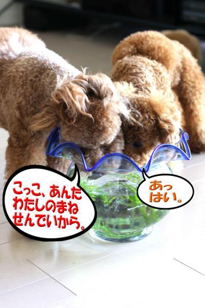15_20080723181330.jpg