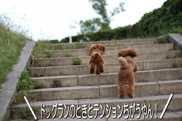 16_20080527141755.jpg