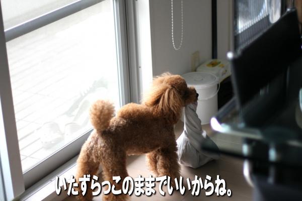 16_20080725173518.jpg