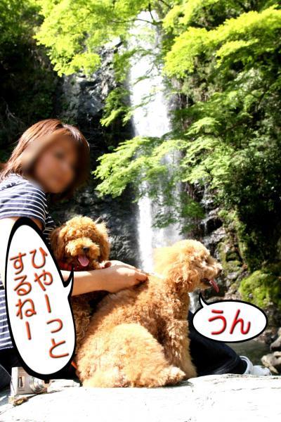 17_20080522162913.jpg