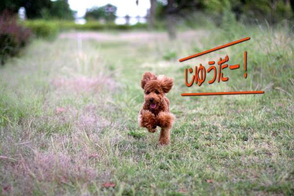 17_20080527141807.jpg